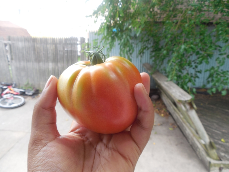 Heart Shaped Tomato!